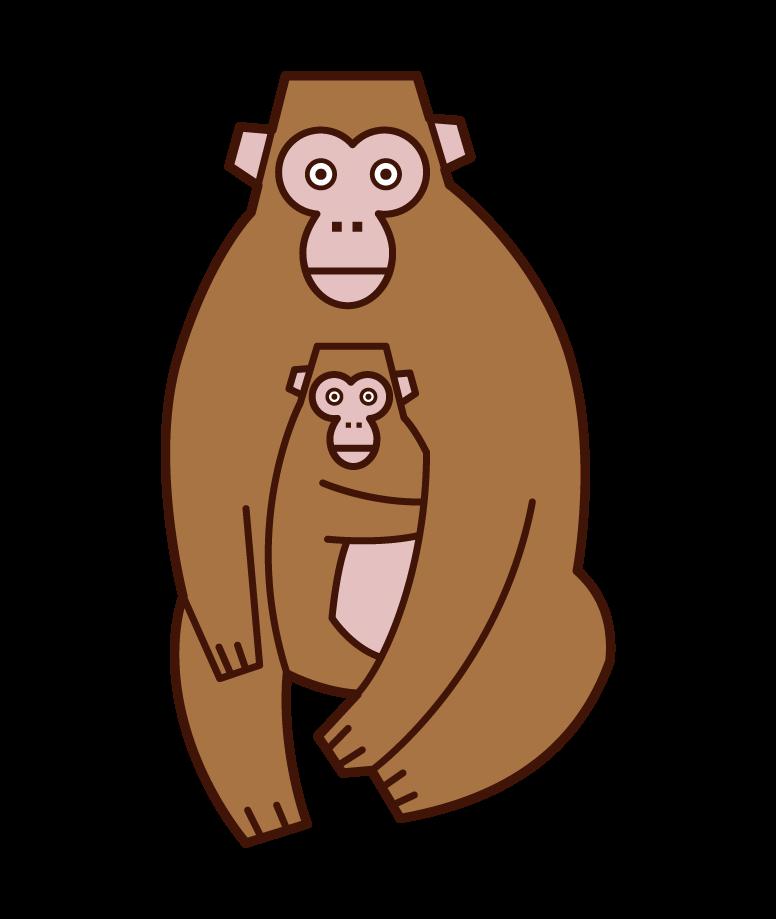 猴子的父母和孩子插圖