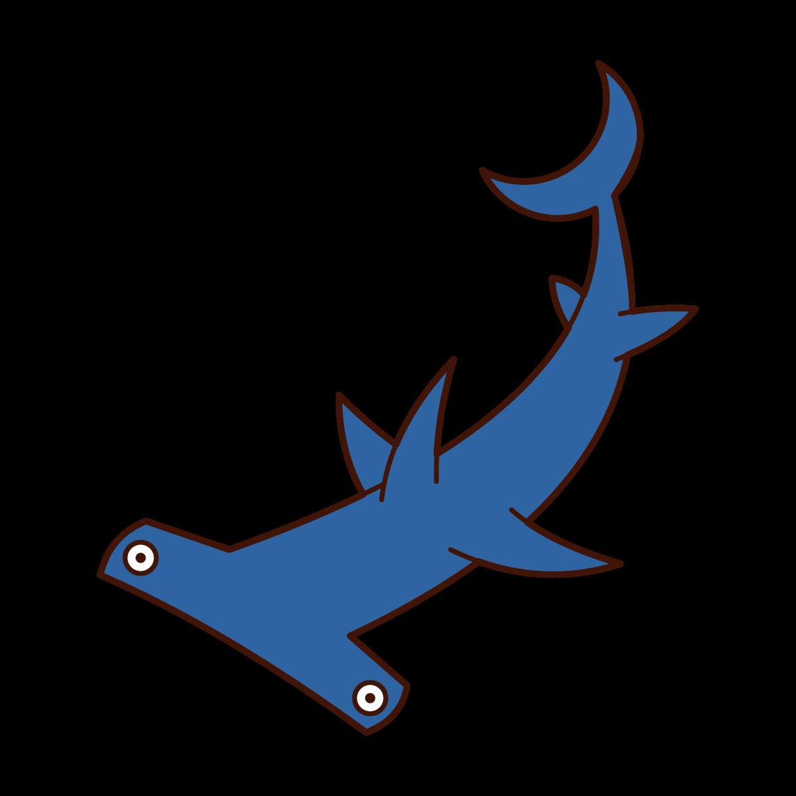 シュモクザメのイラスト