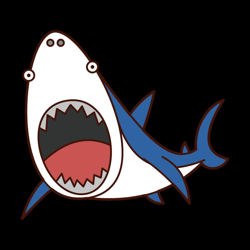 襲いかかるサメのイラスト