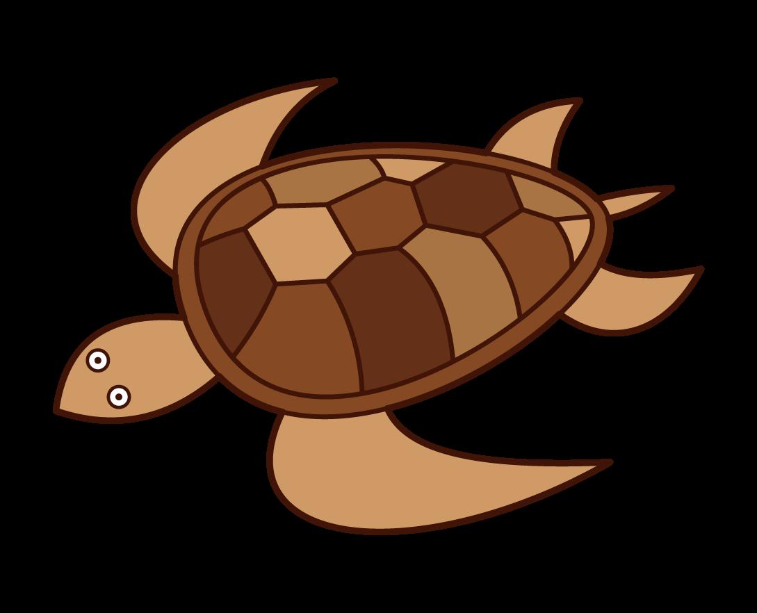 ウミガメのイラスト