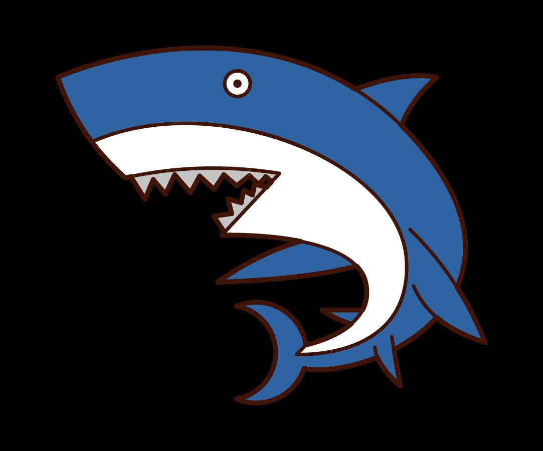 サメのイラスト