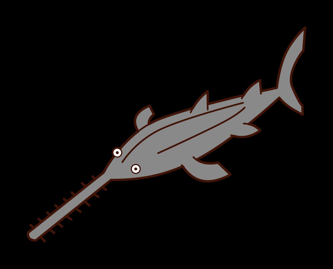 ノコギリザメのイラスト