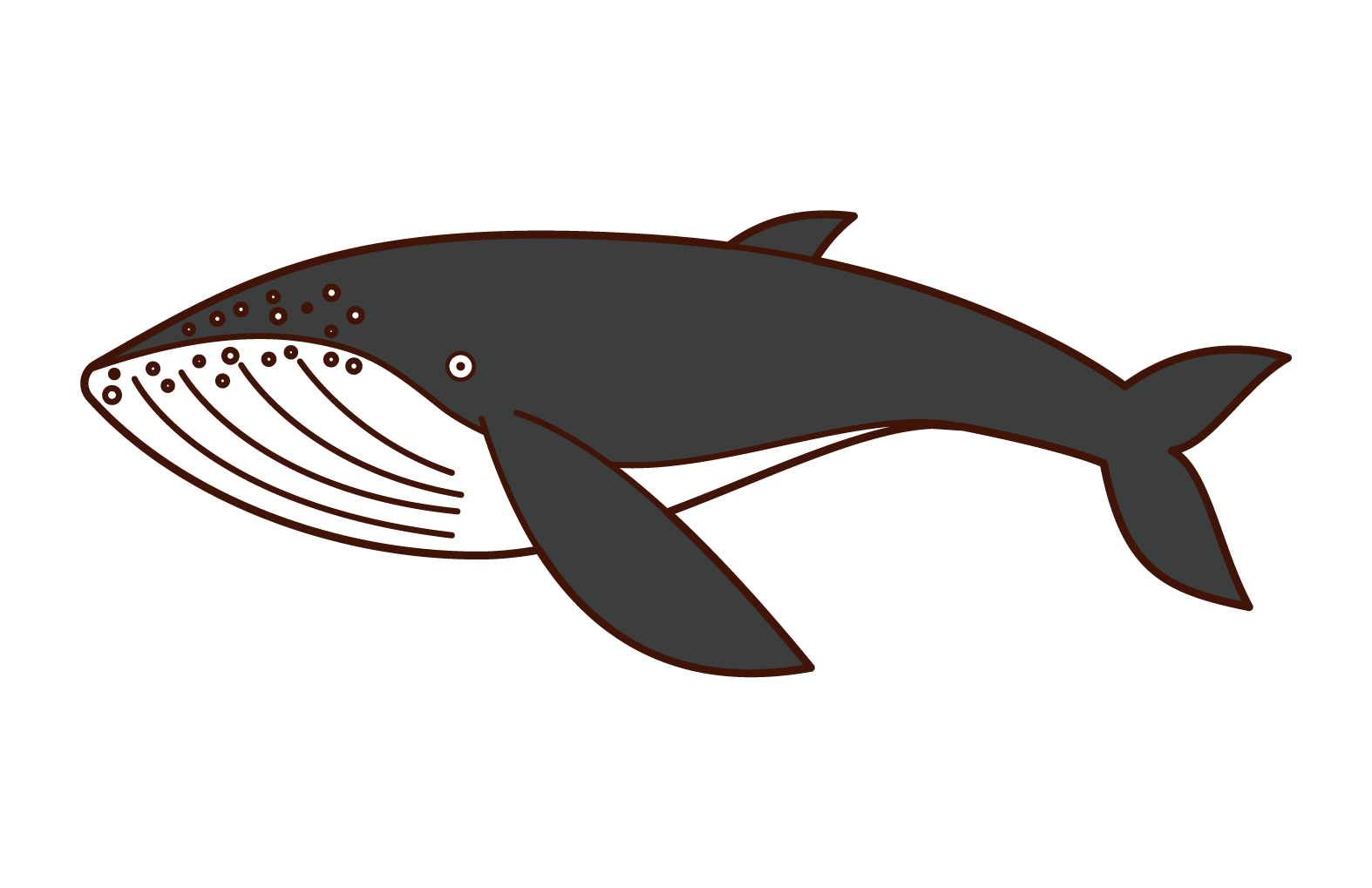Illustration of humpback whale