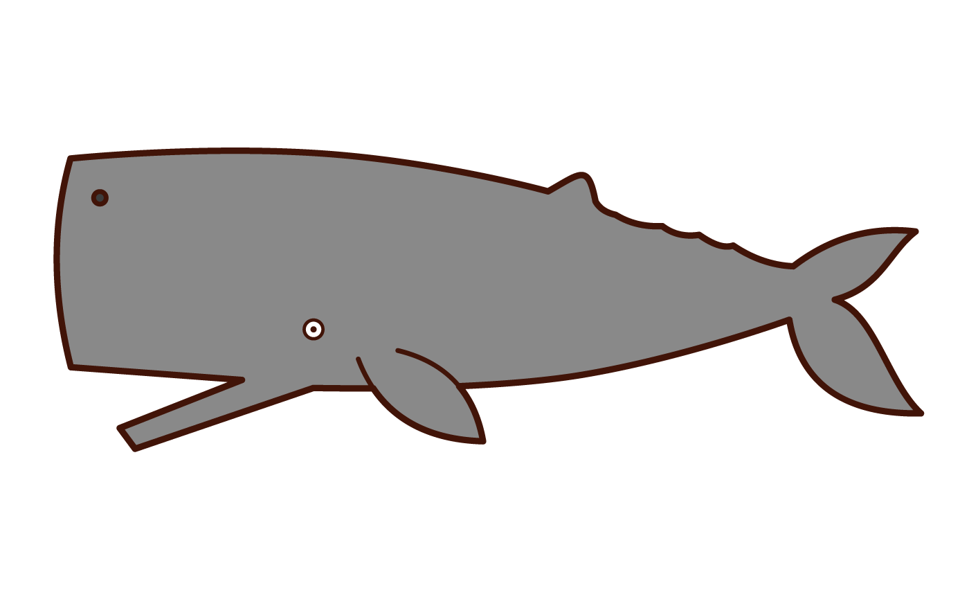 Illustration of the sperm whale