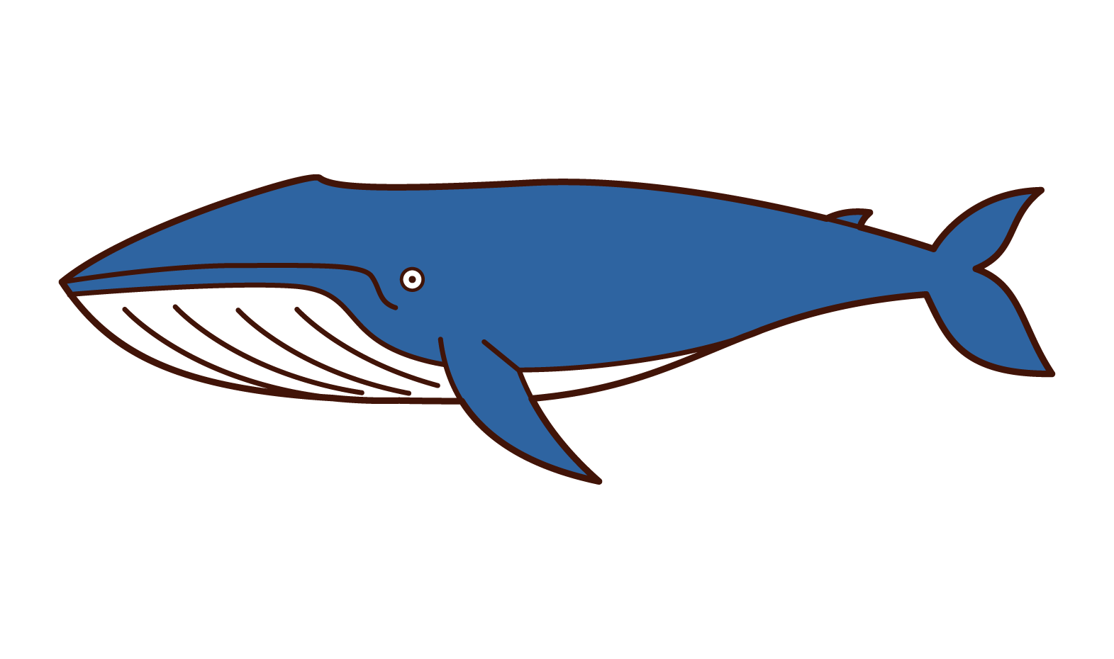 Illustration of a blue whale