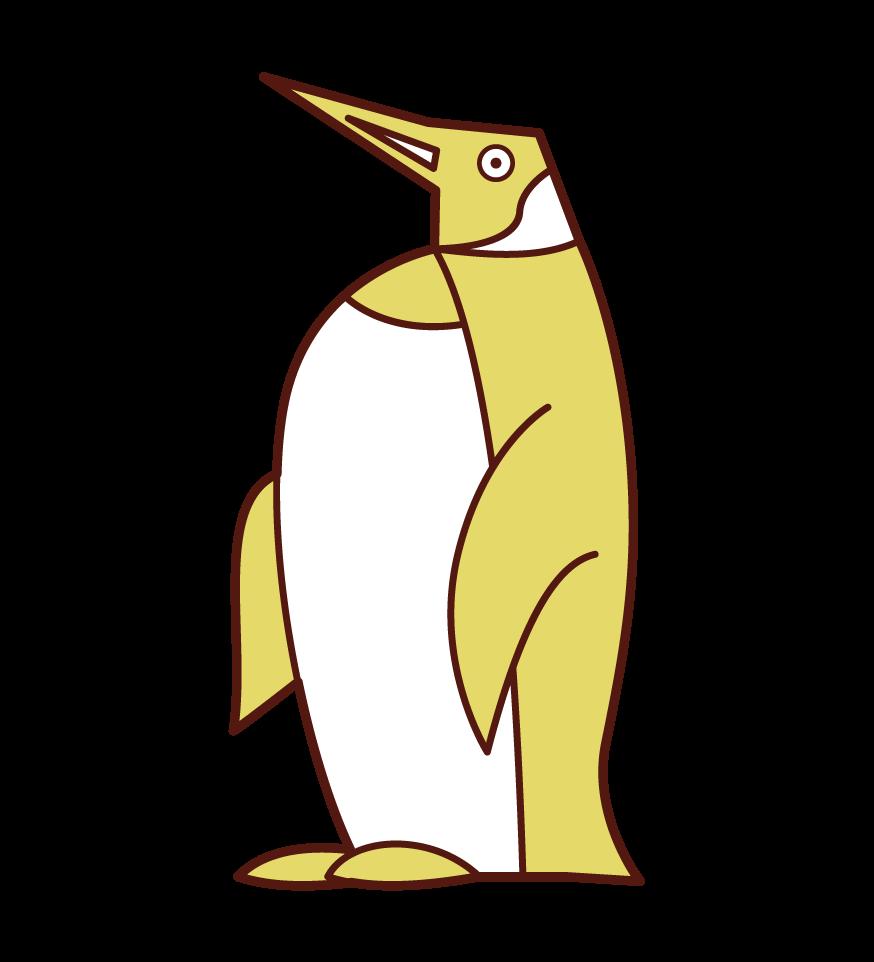 オウサマペンギンのイラスト