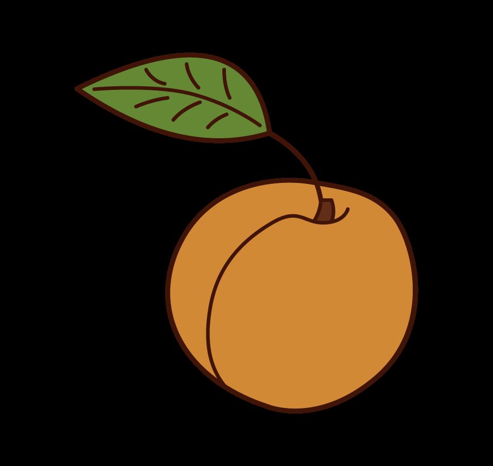 키의 삽화