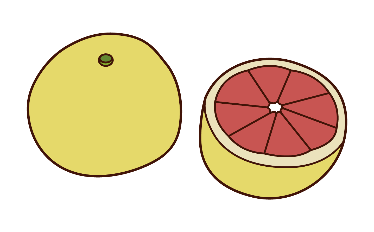 Grapefruit Illustrations