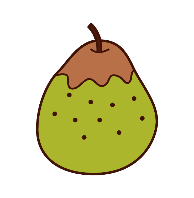 Chinese Pear Illustrations