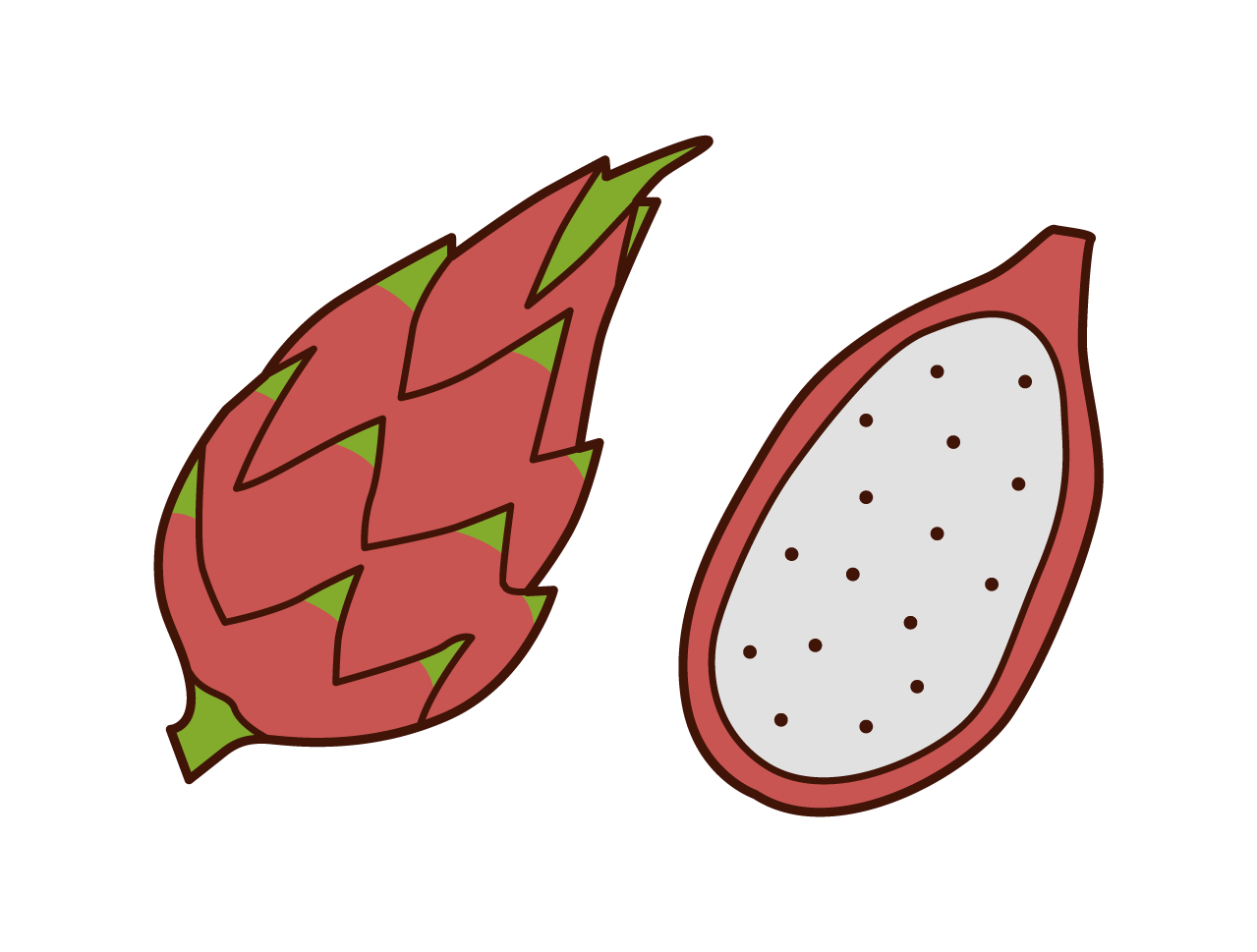 Dragon Fruit Illustrations
