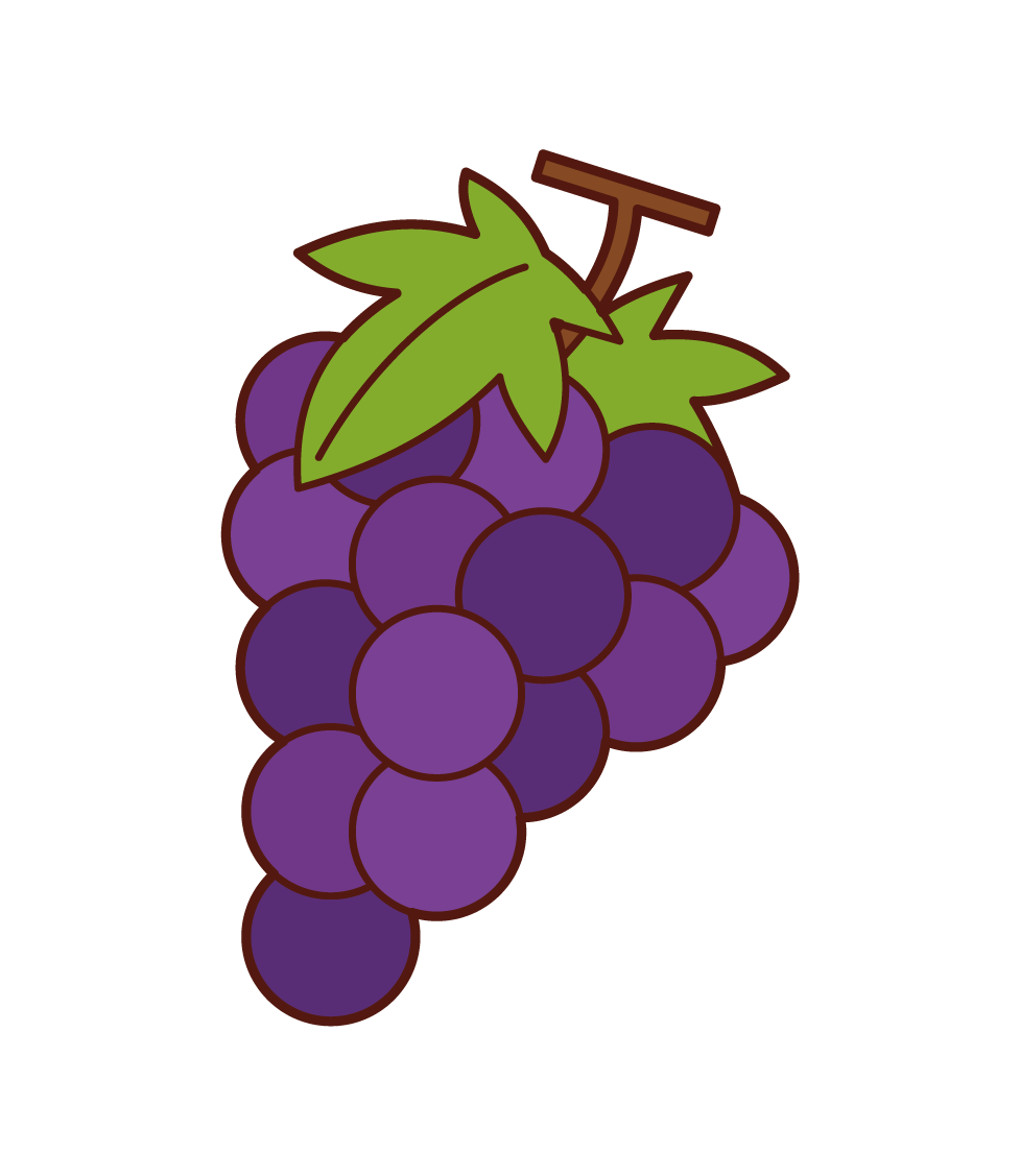 Grape Illustrations