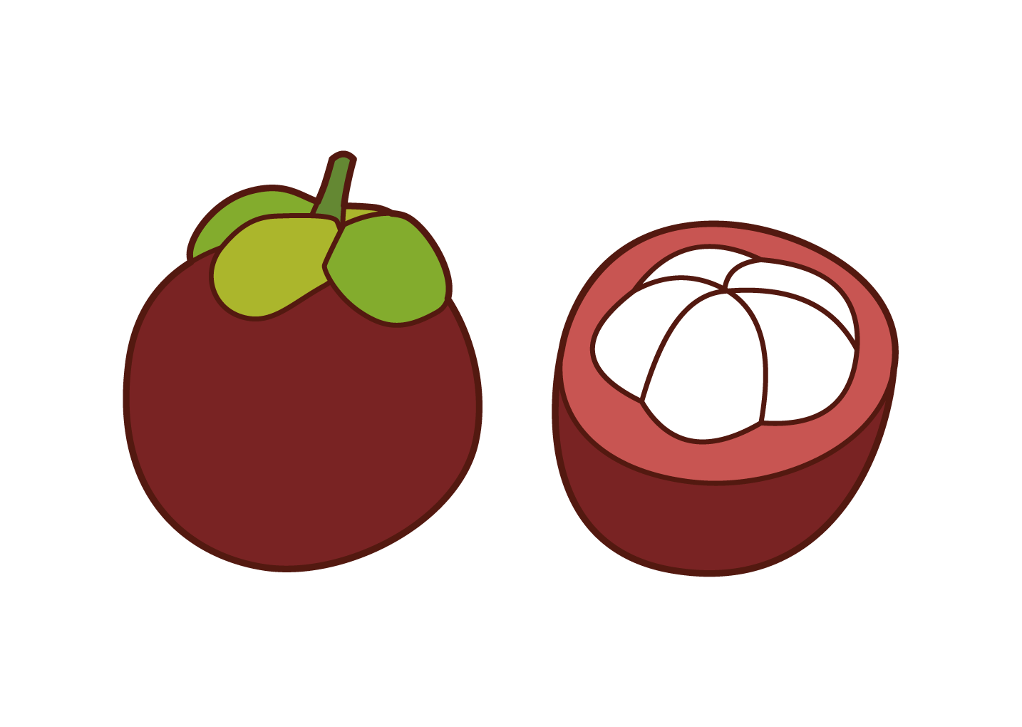Mangosteen Illustrations