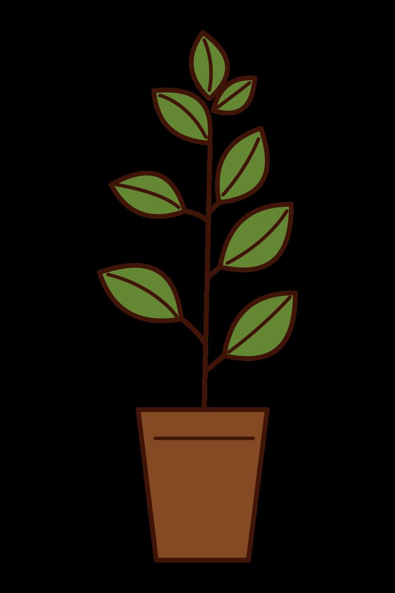 植木のイラスト