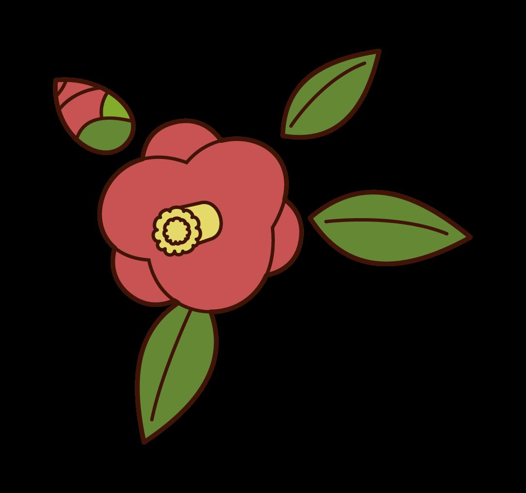 椿のイラスト