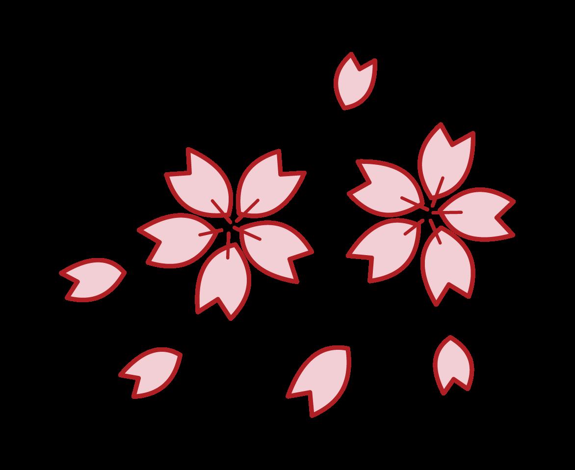 벚꽃 꽃잎의 일러스트