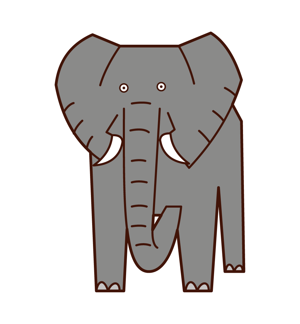 African Elephant Illustration