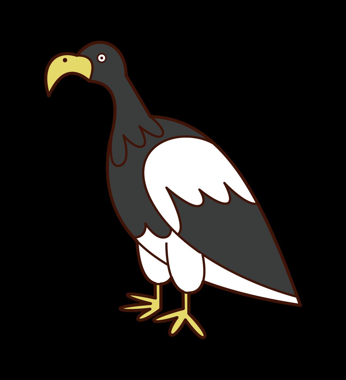 Illustration of a sea eagle