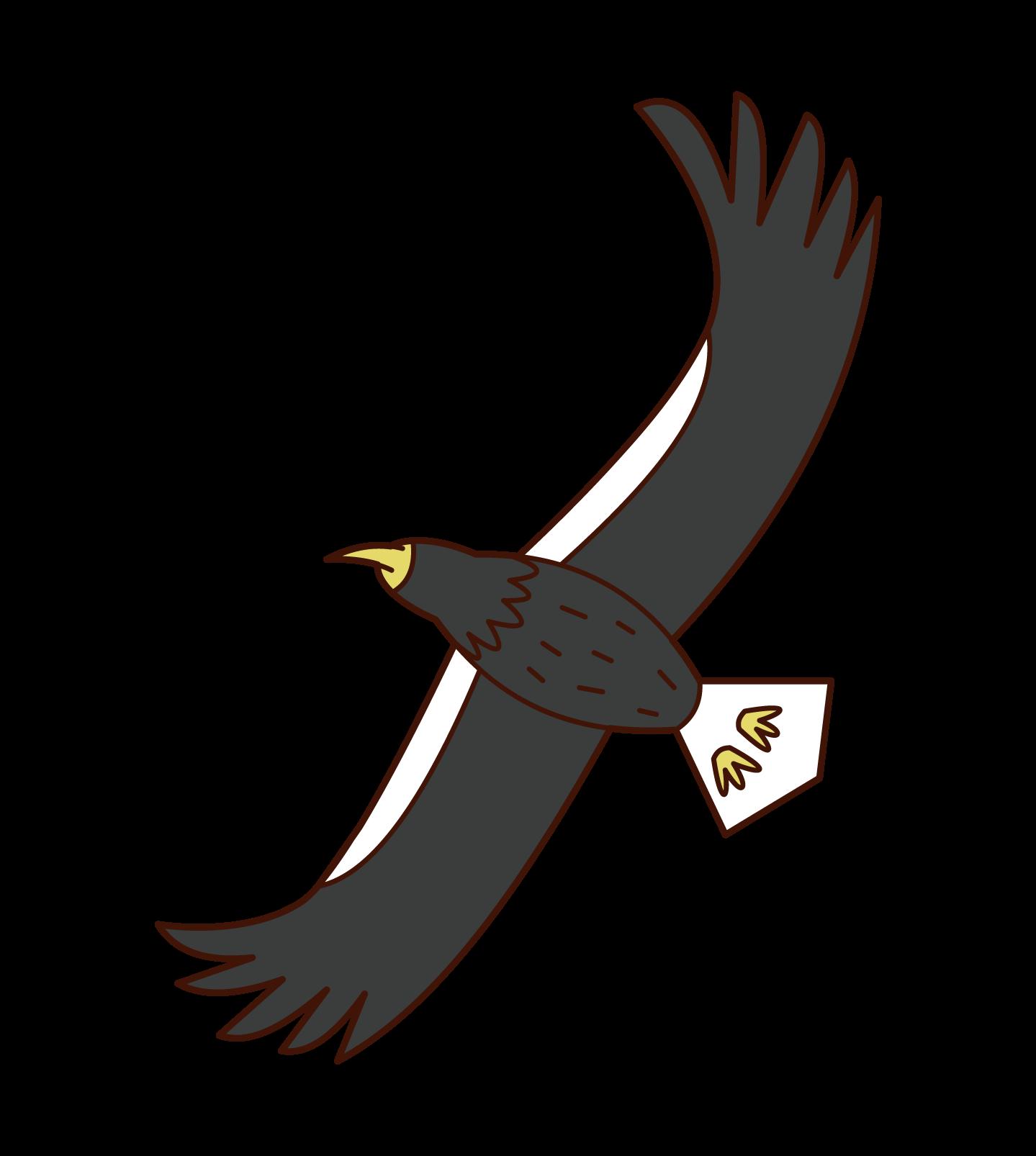 비행 바다 독수리의 삽화