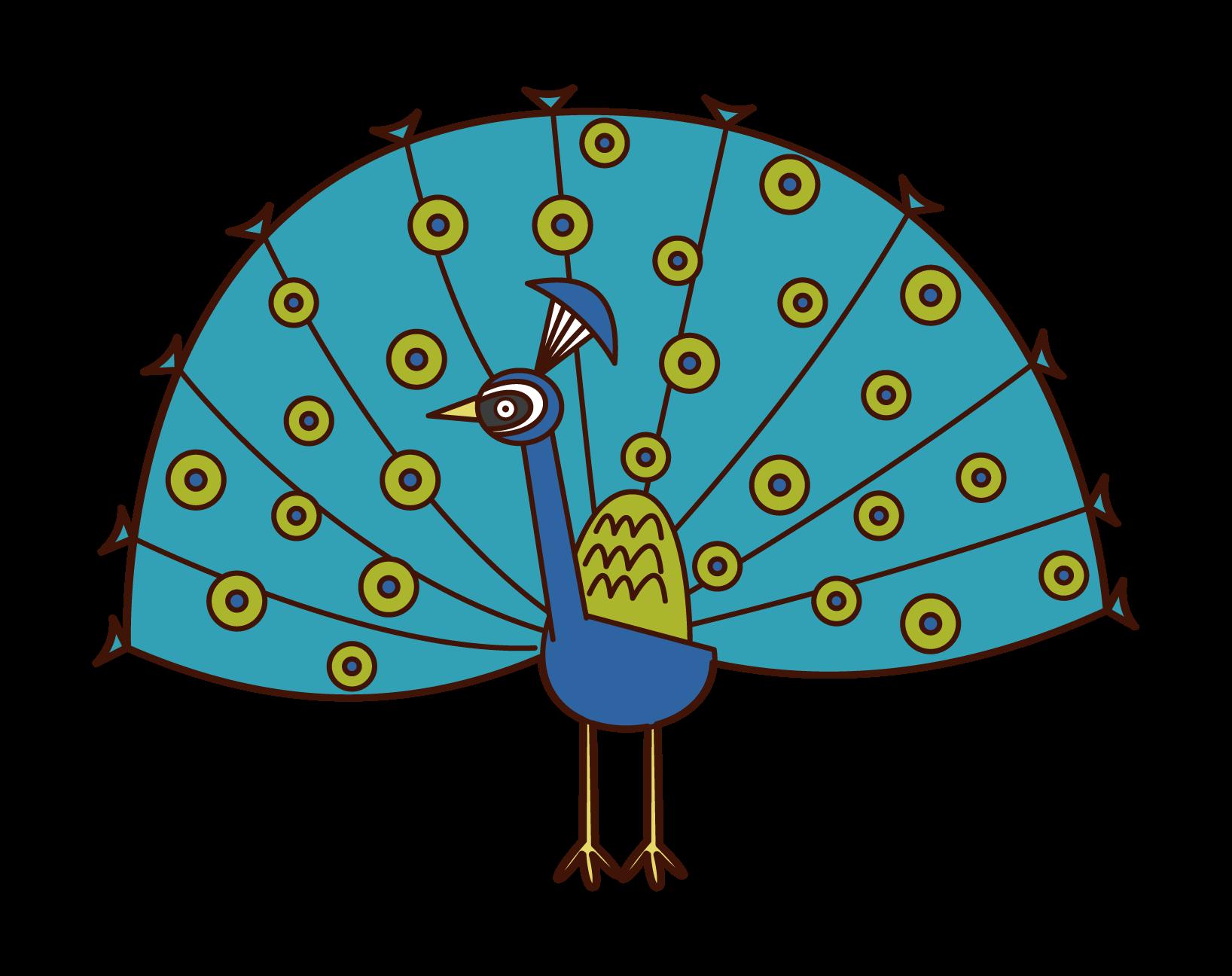 羽を広げたクジャクのイラスト