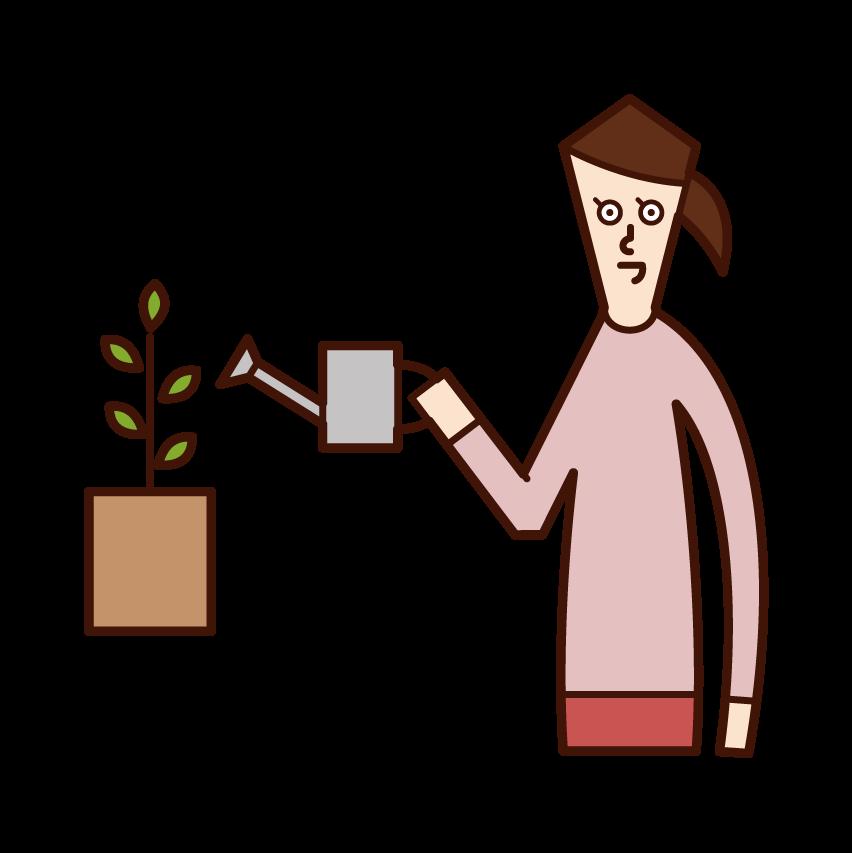 植物に水を与える人(女性)のイラスト