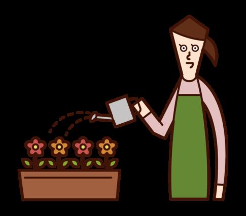 花に水をやる人(女性)のイラスト