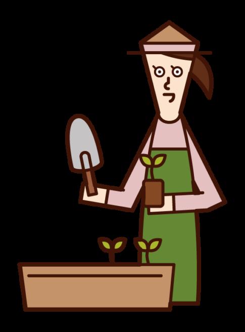 プランターに苗を植える人(女性)のイラスト
