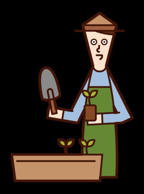 プランターに苗を植える人(男性)のイラスト