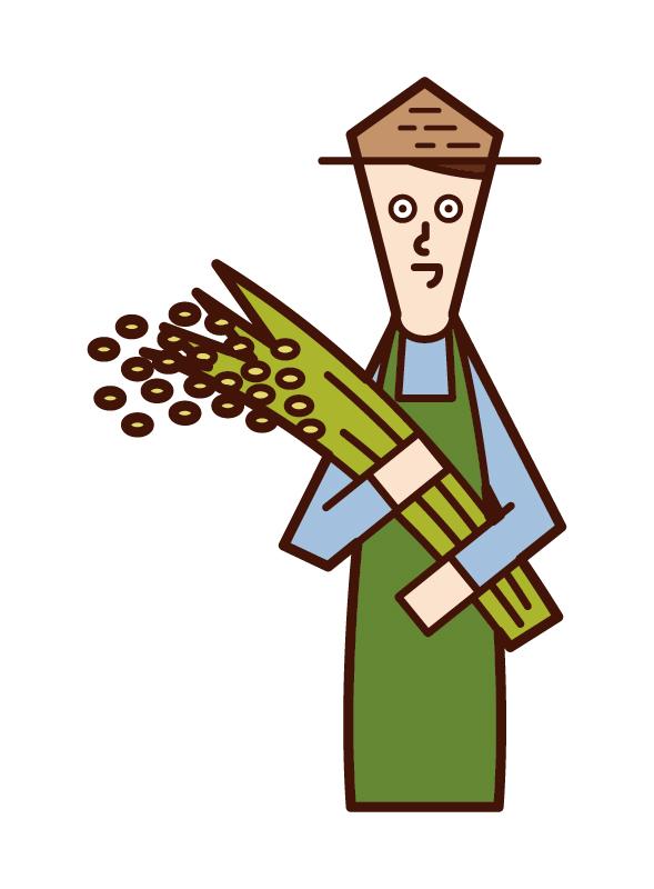 收割水稻的人(男性)的插圖