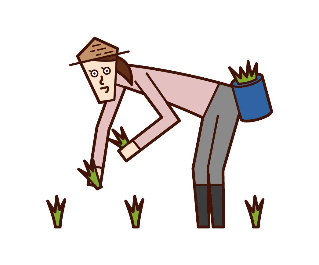 種植水稻的人(女性)的插圖