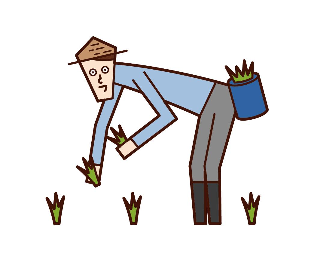 種植水稻的人(男性)的插圖